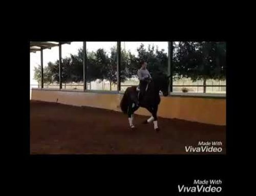 9 yr old prix san jorge stallion for sale. Piro clear and xrays.