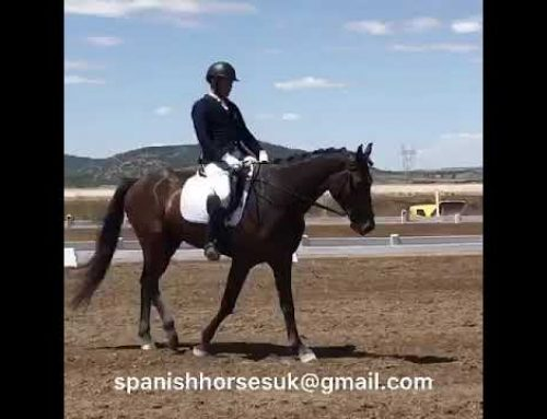 Spanish Horses For Sale