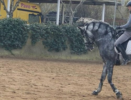 Talented spanish stallion