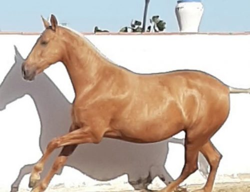 Spectacular mare for sale !