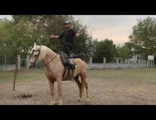 Palomino hacking mare.